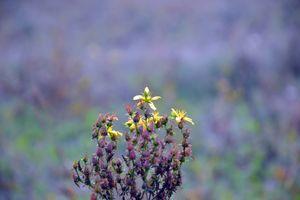Бесплатные фото растение,осень,пейзаж,поле,рыжих,лепестки,lilac background