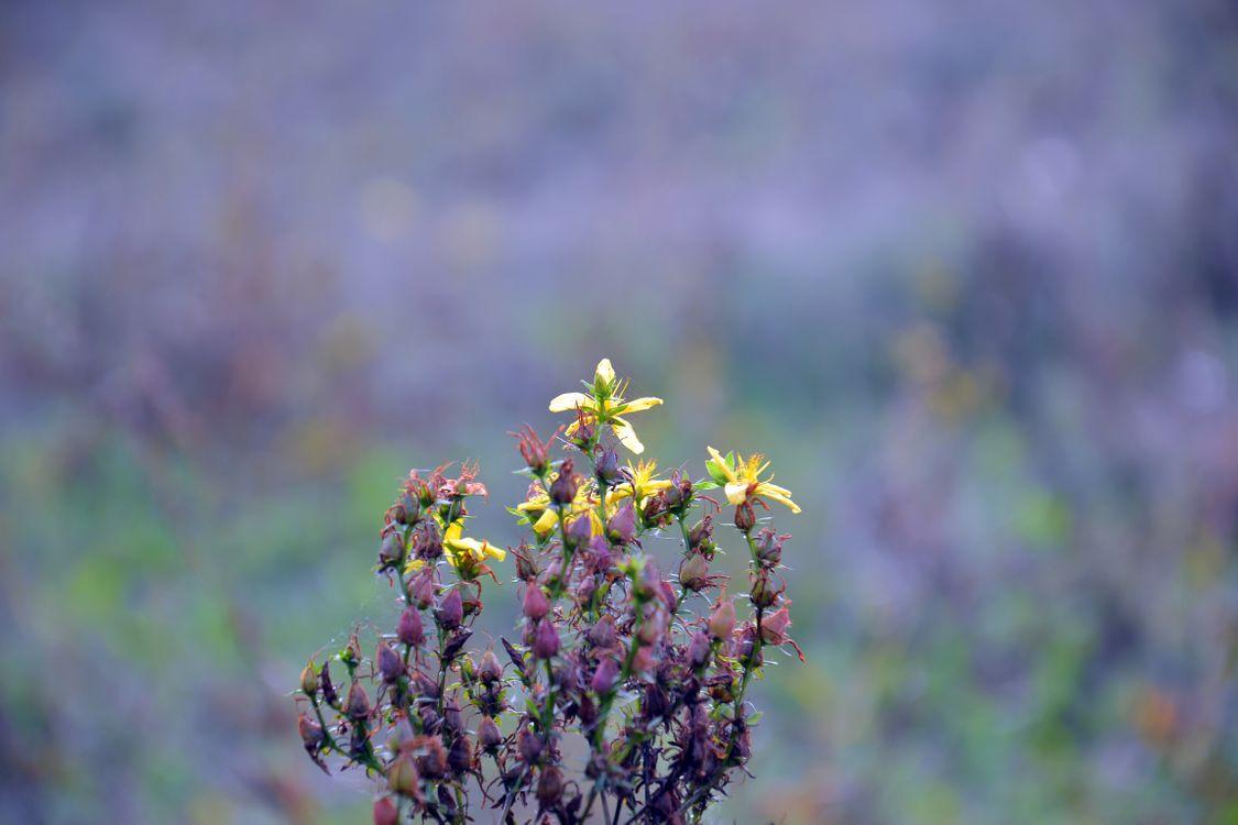 Фото бесплатно растение, осень, пейзаж, поле, рыжих, лепестки, lilac background, куст, природа, полевые цветы, луг, цветение, семена, тычинки, лекарственное растение, цветы
