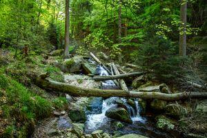 Фото бесплатно лес, река, Creek