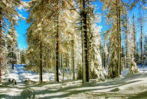 Фото бесплатно зима, снег, зимний