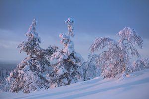Фото бесплатно деревья, снег, лапландия