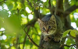 Бесплатные фото кот, кошка, котёнок, взгляд, животное
