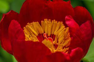 Фото бесплатно цветущее растение, растение, орхидеи