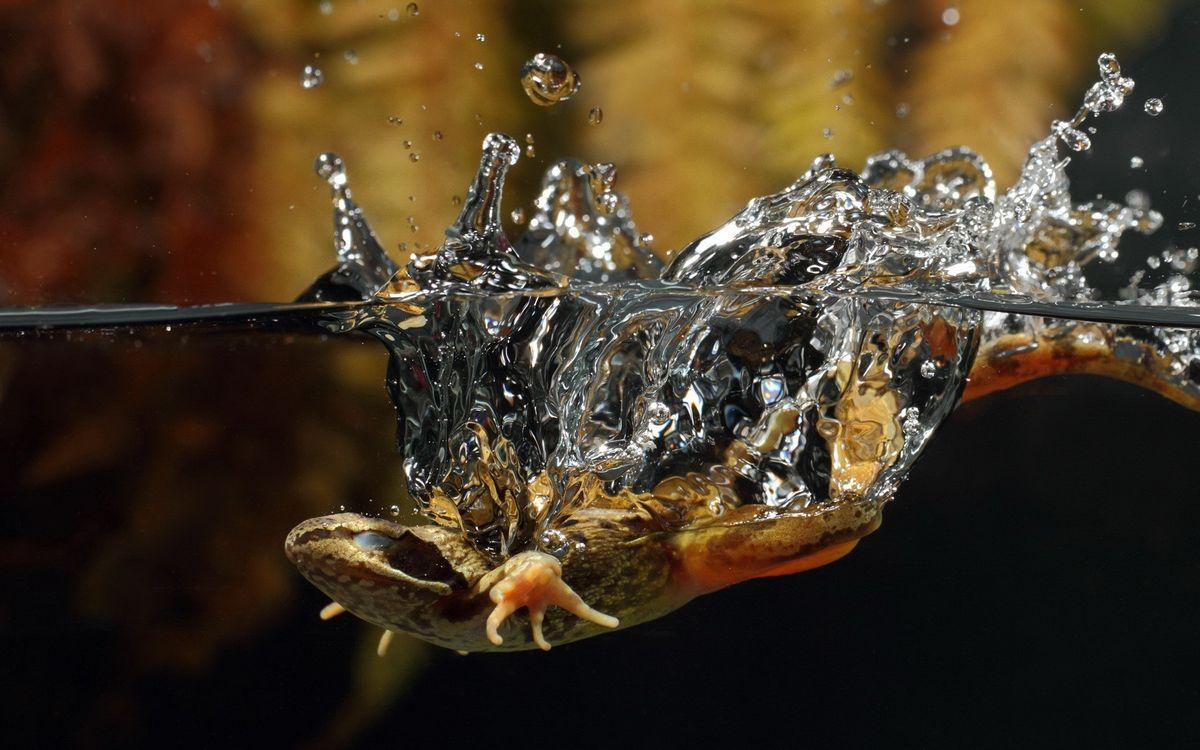 Фото ящерица под водой рептилия - бесплатные картинки на Fonwall