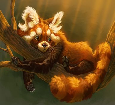 Фото бесплатно красная панда, рисунок, графика