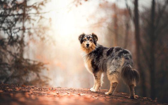 Заставки собака, блики, осень
