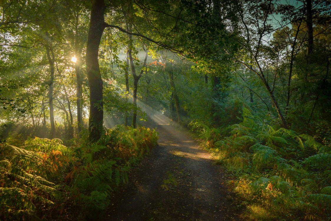 Фото бесплатно лес, деревья, дорога - на рабочий стол