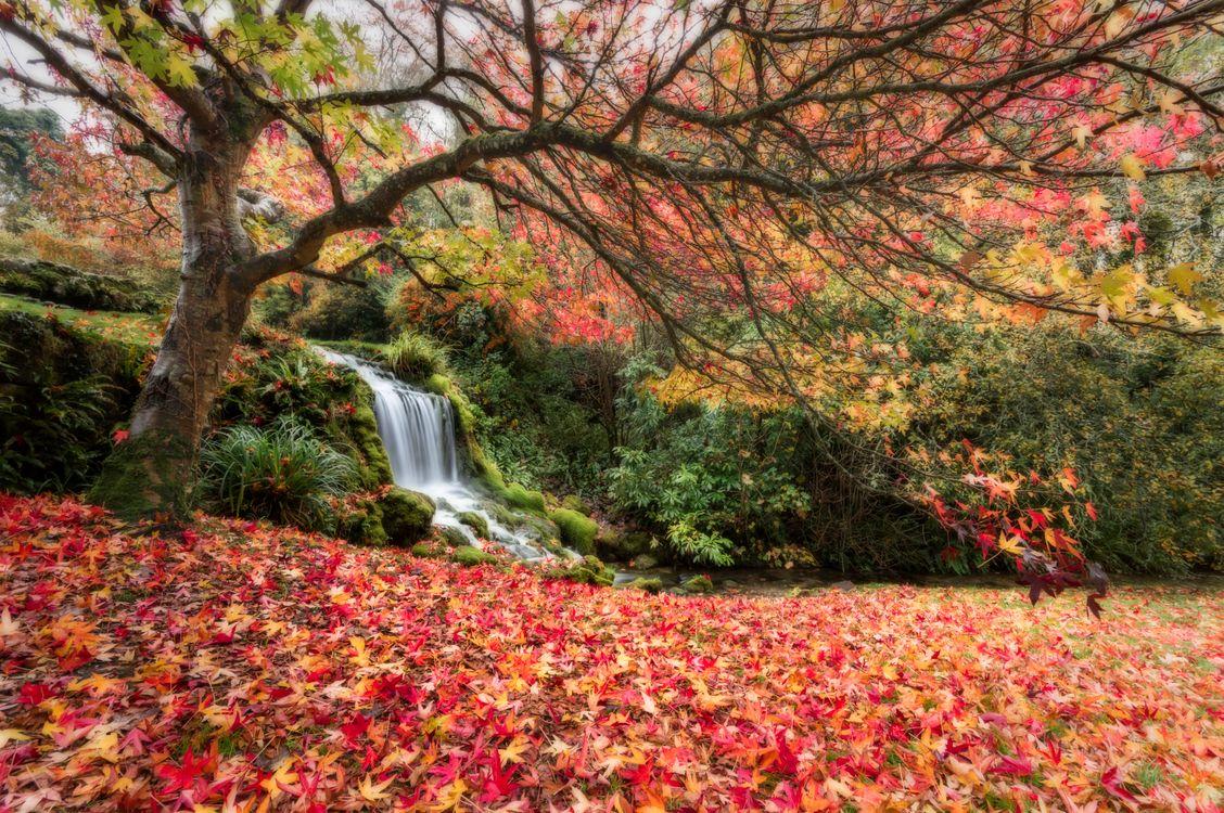 Фото бесплатно осенние краски, осенние листья, водопад - на рабочий стол