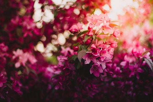 Фото бесплатно цветения, розовые цветы, цветы