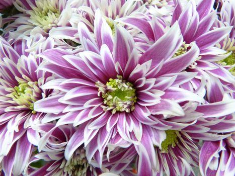 Photo free cut flowers, bloom, beautiful
