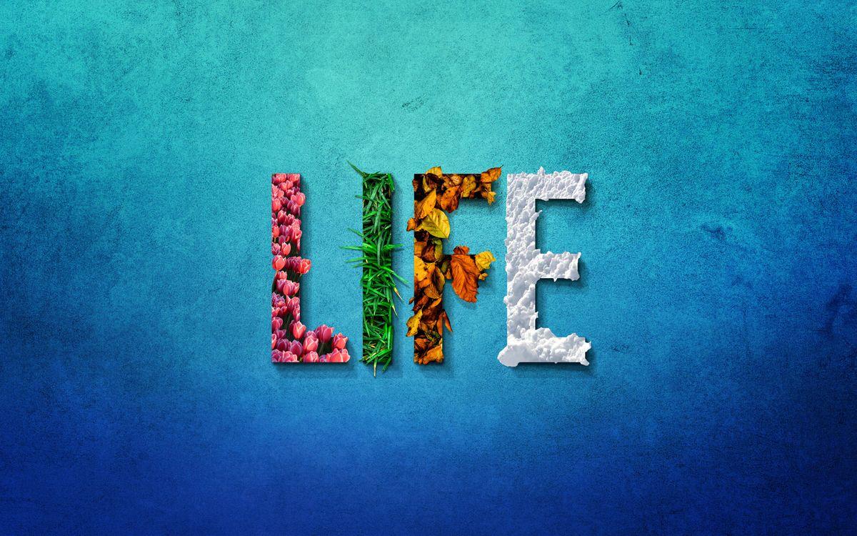 Фото бесплатно жизнь, слова, цветок - на рабочий стол