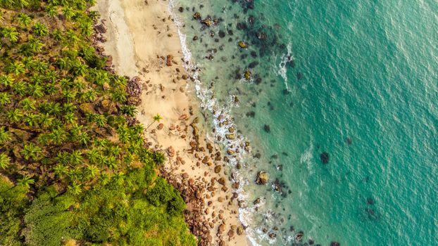 Photo free aerial view, beach, trees