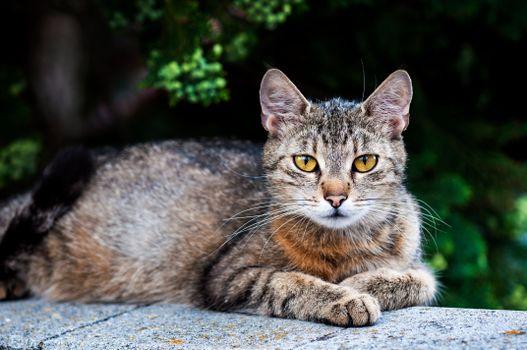 Фото бесплатно животное, кошка, лапы