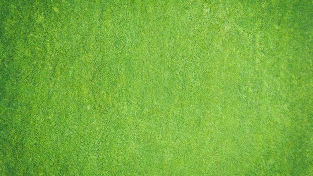 Photo free grass, textures, green