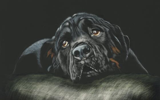 Фото бесплатно лежа, ленивый, собаки