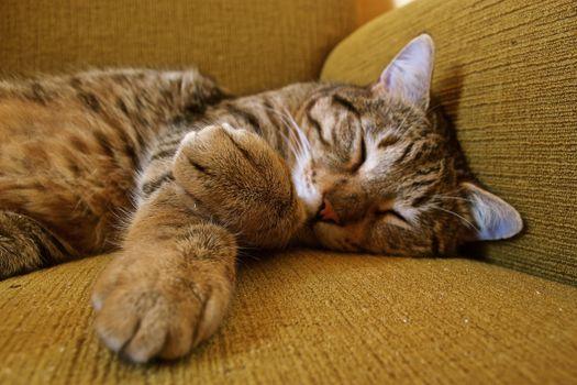 Photo free sleeping, lazy, cat