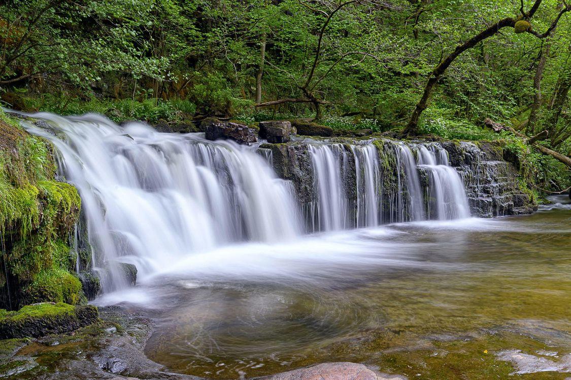 Фото бесплатно лес, деревья, река - на рабочий стол
