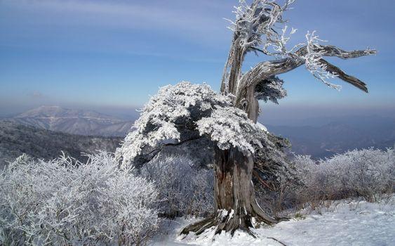 Screensaver winter tree