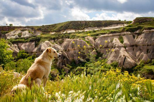 Photo free animals, golden retriever, dogs