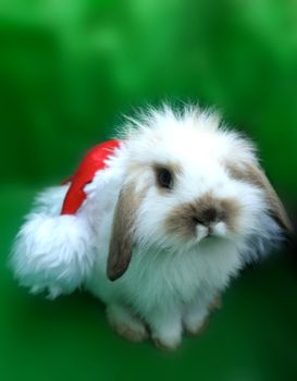 Photo free Bunny, Christmas, eve