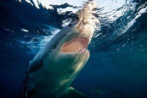 Фото бесплатно Морские обитатели, море, вода