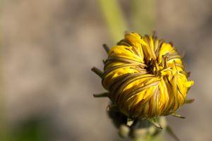 Фото бесплатно нектар, макро, наземное растение