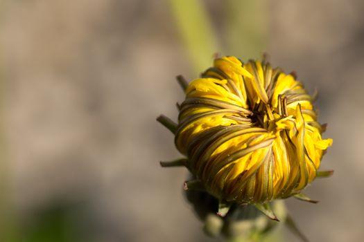 Photo free nectar, macro, terrestrial plant