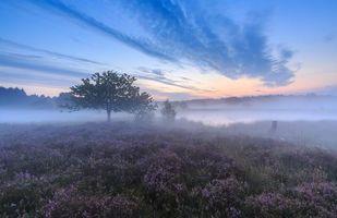 Фото бесплатно туман, пруд, пейзаж