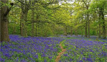 Бесплатные фото лес,деревья,тропинка,цветы,природа