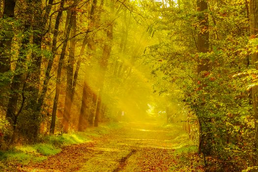 Photo free sun rays, autumn leaves, forest