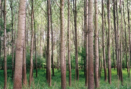 Photo free forest, old growth forest, foliage