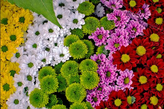 Photo free bouquet, floral background, flowers