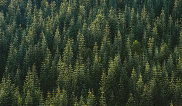 Фото бесплатно дерево, лес, трава