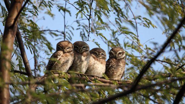 Photo free owl family, trees, leaves