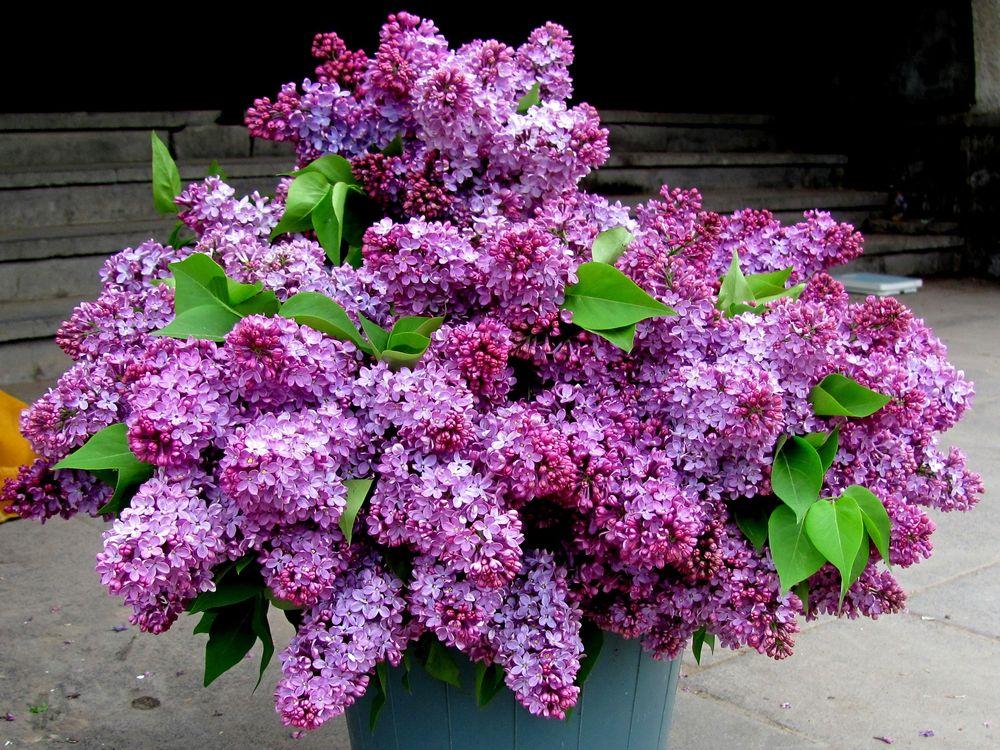 Фото листья ведро весна - бесплатные картинки на Fonwall