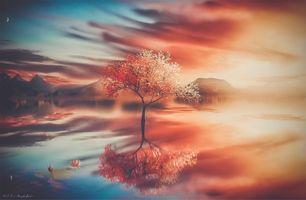 Photo free trees, fantasy, work of art