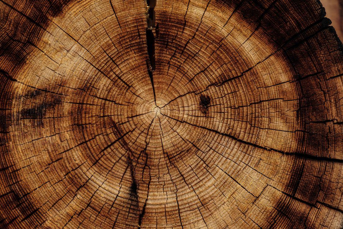 Фото бесплатно ствол, дерево, текстура, trunk, tree, texture, текстуры