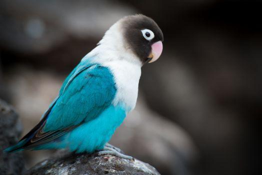 Фото бесплатно стоит, птицы, домашний попугай