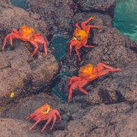Фото бесплатно крабы, море, камни