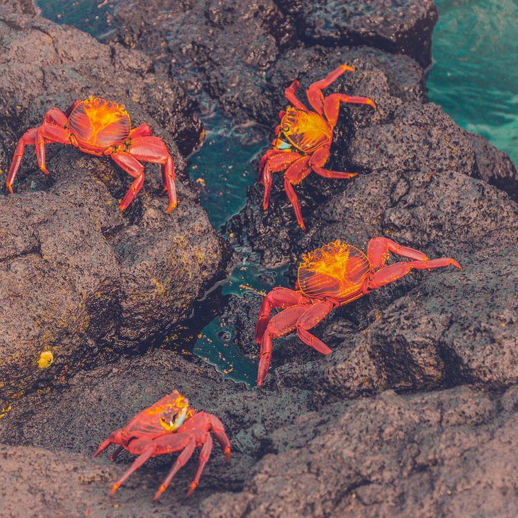 Фото бесплатно крабы, море, камни - на рабочий стол