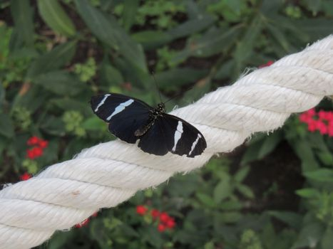 Photo free rope, wings, black butterfly