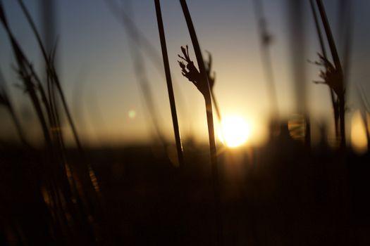 Фото бесплатно силуэт, свет, солнце