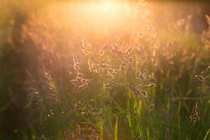 Трава и закат