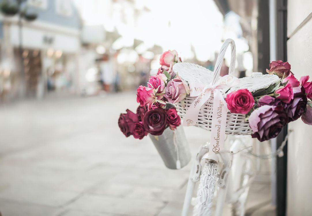 Фото бесплатно ulitsa, velosiped, rozy - на рабочий стол