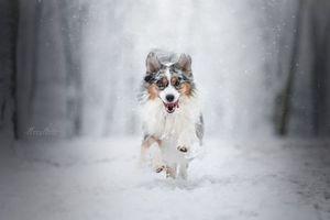Заставки домашнее животное, красота, снег