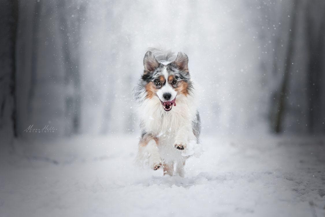 Обои домашнее животное, красота, снег картинки на телефон