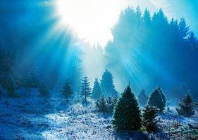 Фото бесплатно лес, поляна, иней, лучи солнца, деревья, пейзаж