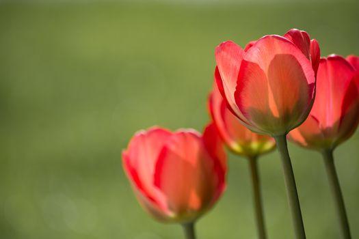 Фото бесплатно природа, растение, солнечный свет
