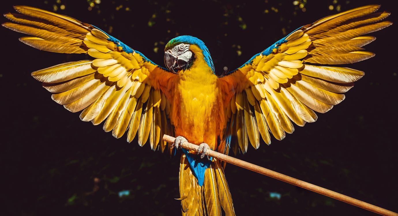Фото желтый попугай крылья перья - бесплатные картинки на Fonwall