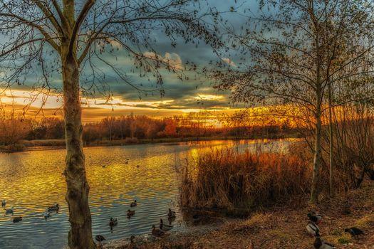 Фото бесплатно закат, парк, озеро, сумерки, деревья, птицы, водоплавающие птицы, небо, пейзаж